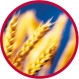 VITACEL® Wheat Fiber